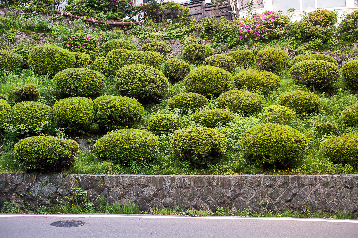 japan Hakone green sheep